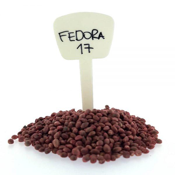 Fedora 17 CBD/Hemp Seeds Original Mothers Company