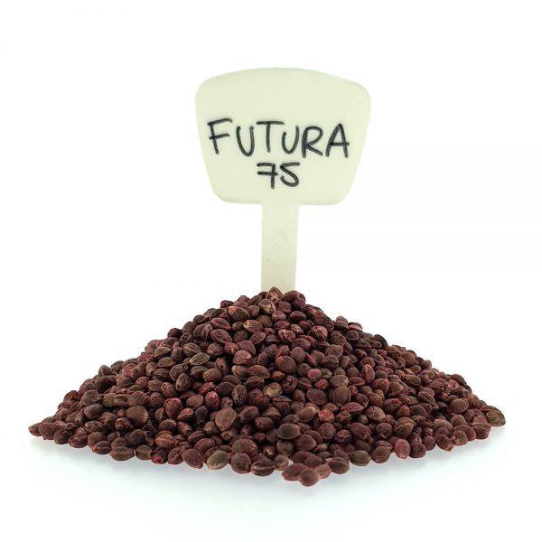 Futura 75 CBD/Hemp Seeds Original Mothers Company