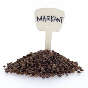 Markant CBD/Hemp Seeds Original Mothers Company