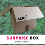 Suprise Box 16-pack - Original Mothers Company